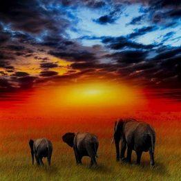 Slika-Savanne-Elefants-51813